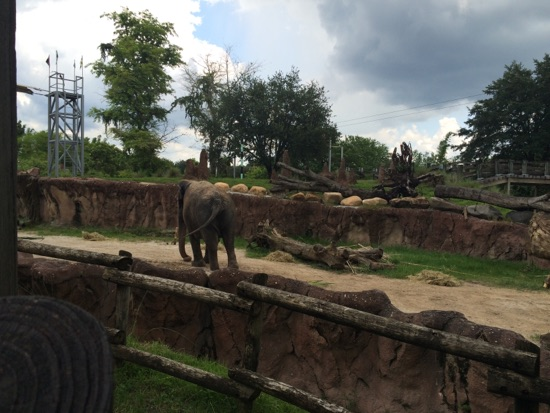 The Big One Live Trip Report Orlando Day 17 Busch Gardens