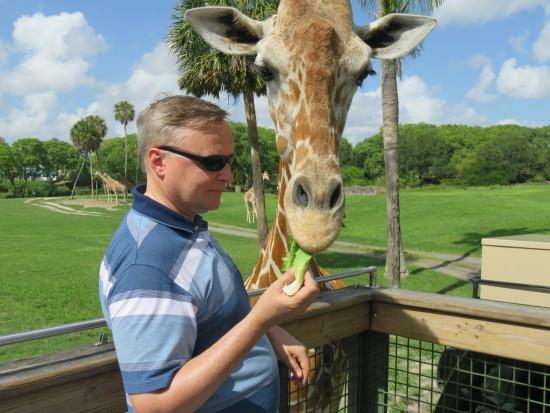 Thedibb Serengeti Safari At Busch Gardens
